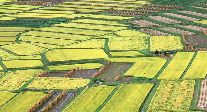 BigHaa获种子轮融资 为农民提供农产服务